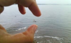 Bule-bule yang lagi pada surfing
