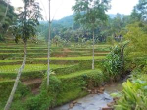 Area persawahan di sekitar Gunun Padang