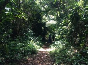 Hutan di pulau Santolo yang harus dilewati menuju sisi pantai yang bisa untuk dirikan tenda