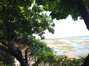 View dari tempat camp kami, eh ada neng geulis di pohon tuh