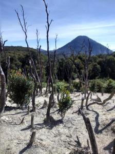 Hutan mati di musim kemarau