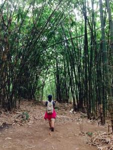 Di trek awal kita bakal melewati kebun bambu yang adem ayem.